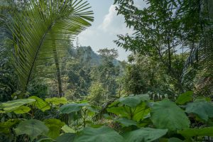 Jungle on Tu Lan Expedition
