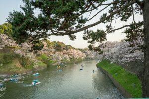 Boats between Cherry Trees in Tokyo